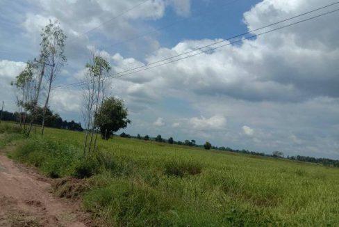 ขายที่ดิน 410 ไร่ ขายไร่ละ 1.3 แสน ต.วังศาล อ.วังโป่ง จ.เพชรบูรณ์ เหมาะสำหรับทำการเกษตร มีแร่ทองคำในที่ดินโทร0842847102
