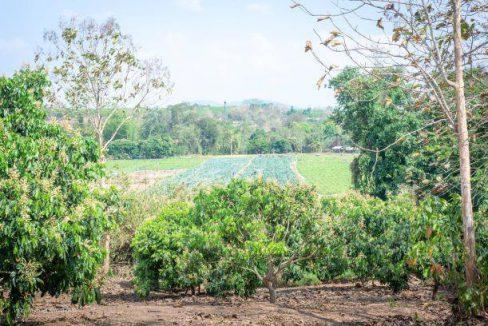 ที่ดินเนินเขาวิวสวยงามมาก โฉนด 2 ไร่ 2 งาน 90 ตารางวาใกล้พระบาทห้วยต้ม เหมาะซื้อเก็บด่วน400,000