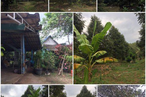บ้านสวนทุเรียน สวยติดดอกแล้ว 6ไร่ 3งาน ติดคลองยาว จันทบุรี