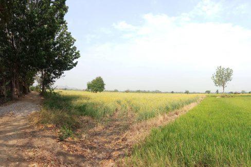 ขายที่ดินเพชรบูรณ์ โฉนด วิเชียรบุรี 20 ไร่ ไร่ละ 130,000