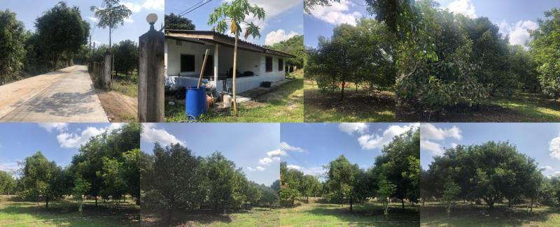 บ้านพร้อมสวนผลไม้โฉนด 4-3-99 ไร่ จันทบุรี