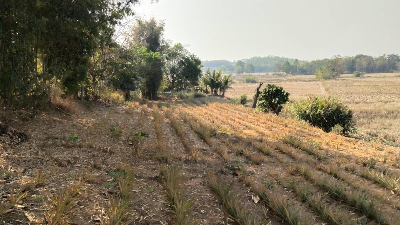 CR63082 บ้านสวนพร้อมที่นาและเนิน 7-2-70 ไร่ เขตอำเภอเมือง 1,700,000 บาทยกแปลง เชียงราย
