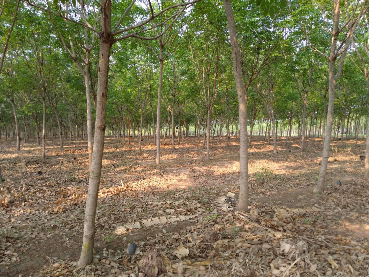 พื้นที่เกษตรขนาดใหญ่! ที่ดิน 156-3-84 THB18,840,000 ต.สร้างก่อ, อ.กุดจับ, จ.อุดรธานี