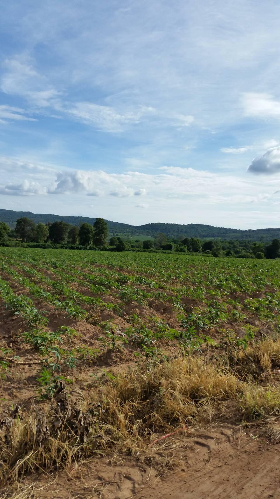 ขายที่ดินเหมาะทำเกษตรกร 60 ไร่ ไร่ละ 30000 บาท ต.วะตะแบก อ.เทพสถิต จ.ชัยภูมิ